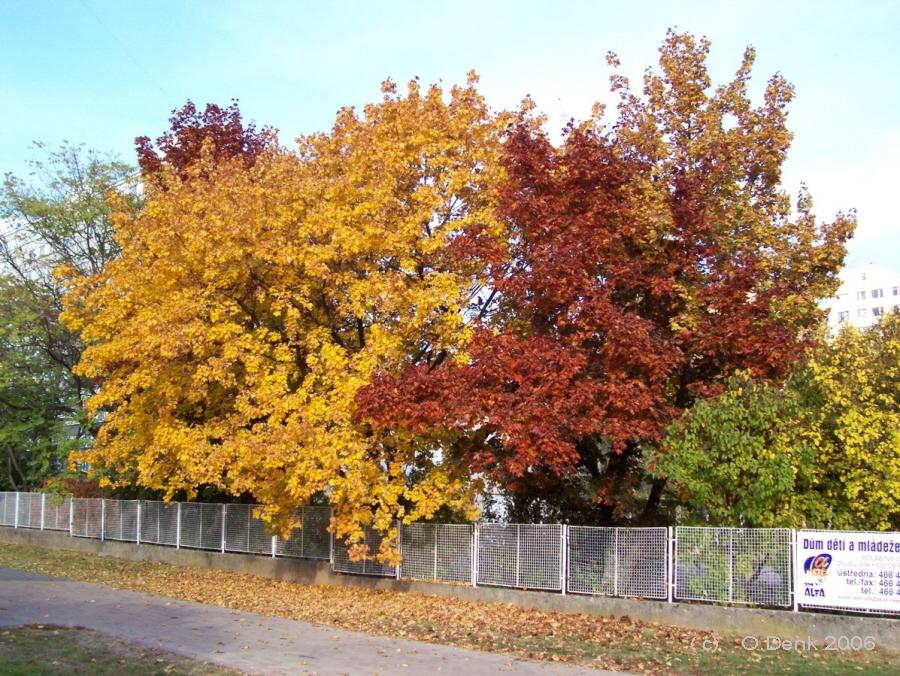 Podzim na Polabinách<