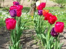 Jaro na zahradě